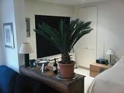Lovely Apartment
